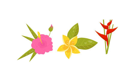 Tropical Flora with Bird of Paradise and Plumeria Flower Vector Set