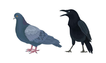 Feathered Birds or Avian with Crow and Pigeon Vector Set Illustration