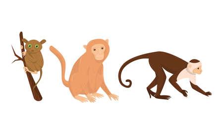 Monkey with Tarsier Sitting on Tree Branch Vector Set