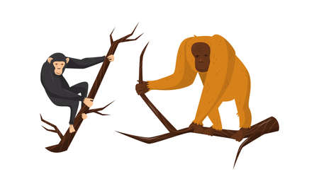 Monkey with Orangoutang Sitting on Tree Branch Vector Set