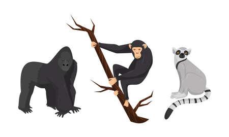 Monkey with Chimpanzee Sitting on Tree Branch Vector Set