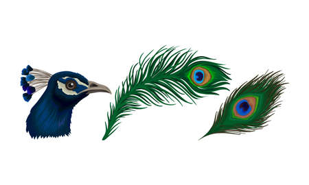Peafowl or Peacock Head with Crest and Bright Feathers Vector Set