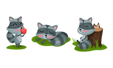 Cute Raccoon with Striped Coat Eating Apple and Sleeping Vector Set