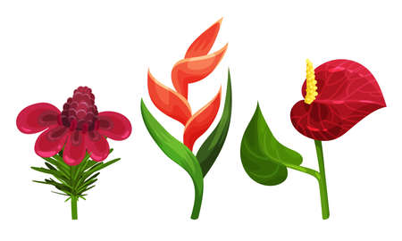 Tropical Flora with Anthurium Flower on Stem Vector Set 版權商用圖片 - 157373840