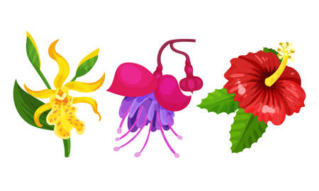 Tropical Flora with Hibiscus Flower on Stem Vector Set