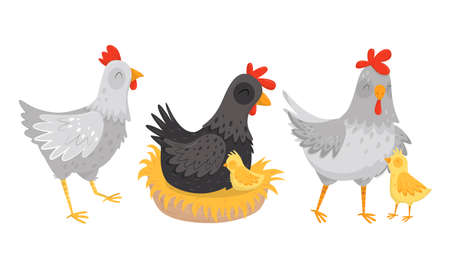 Hen Sitting on Eggs with Chicks Walking Nearby Vector Set