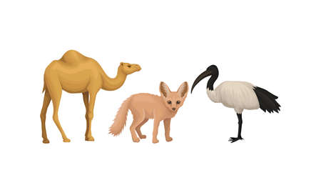 Desert Animals with Camel and Fennec Fox Vector Set
