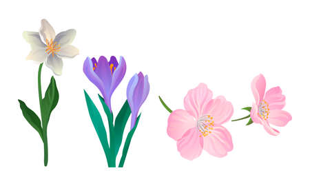 Blooming Field and Meadow Flowers with Tender Petals on Stem Vector Set Ilustrace
