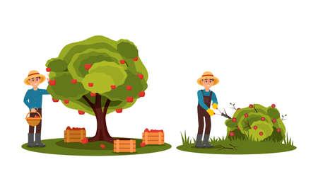 Man Farmer Picking Apples and Pruning Flower Bush Vector Illustration Set Ilustracja