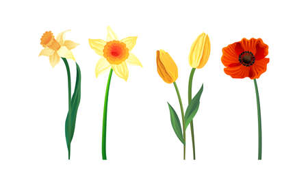 Blooming Field and Meadow Flowers with Tender Petals on Stem Vector Set 向量圖像