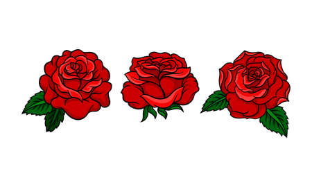 Decorative Blown Red Roses with Petal and Leaves Vector Set. 向量圖像