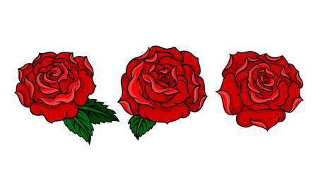 Decorative Blown Red Roses with Petal and Leaves Vector Set. 版權商用圖片 - 157795356