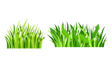 Green Grass with Narrow Leaves Growing Plant Vector Set