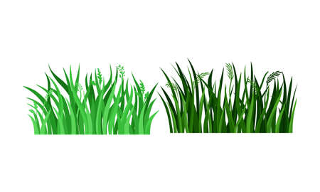 Lush Grass Blades with Narrow Leaves as Growing Plant Vector Set