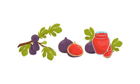 Fig Fruit with Jam in Glass Jar Vector Set