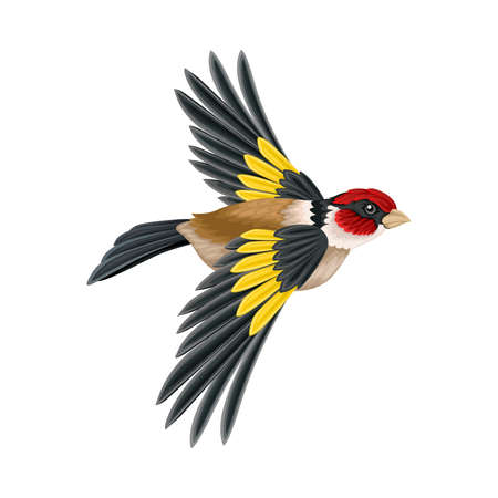 Goldfinch as Warm-blooded Vertebrates or Aves with Feathers and Toothless Beaked Jaw Vector Illustration Illustration