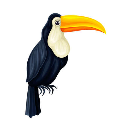 Toucan with Large Bill as Warm-blooded Vertebrates or Aves Vector Illustration