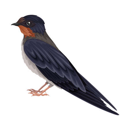 Swallow or Martin as Warm-blooded Vertebrates or Aves Vector Illustration
