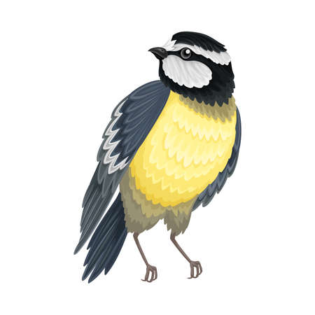 Tit with Black Head as Warm-blooded Vertebrates or Aves Vector Illustration 向量圖像
