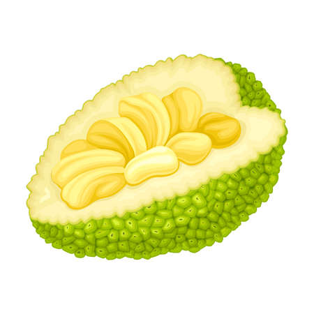 Ripe Jackfruit with Green Pimpled Shell and Fibrous Core Vector Illustration Illustration