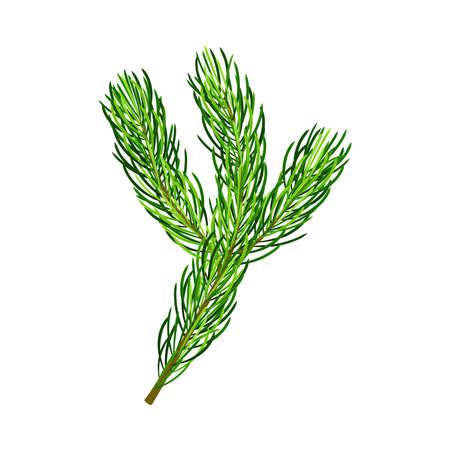 Green Pine Tree Evergreen Branch with Needle Leaves Vector Illustration Ilustração