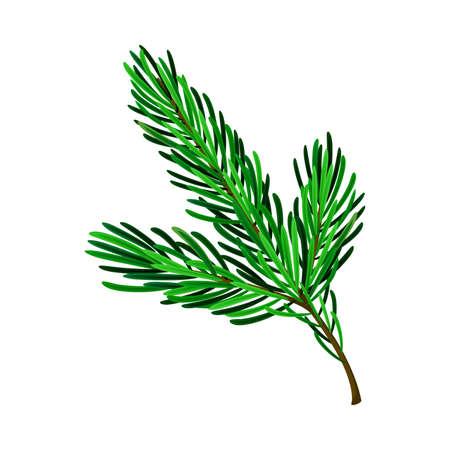 Evergreen Pine Tree Branch with Needle Leaves Vector Illustration Ilustração