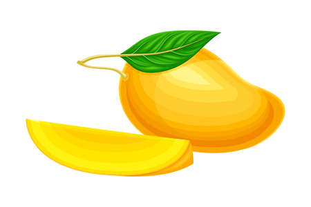 Mature Orange Mango with Cutout Section Vector Illustration. Fragrant Tropical Fruit with Sweet Flavour Concept