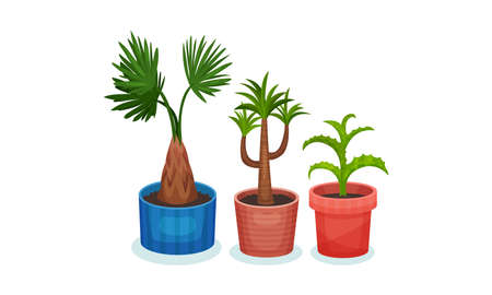 Succulent Plants Growing in Ceramic Flowerpots Vector Set 向量圖像