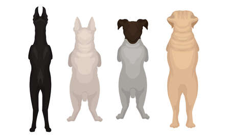 Dogs of Different Breeds Standing on Hind Legs Vector Set