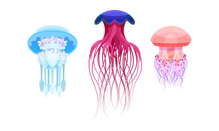 Jellyfish or Sea Jellies as Free-swimming Marine Animal Vector Set Ilustração