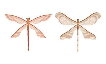 Dragonfly with Two Pairs of Strong, Transparent Wings Vector Set