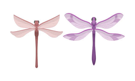 Dragonfly with Long Body and Transparent Wings Vector Set