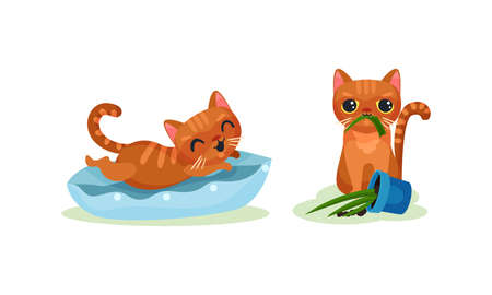 Naughty Playful Kitten Chewing Plant and Jumping on Pillow Vector Set
