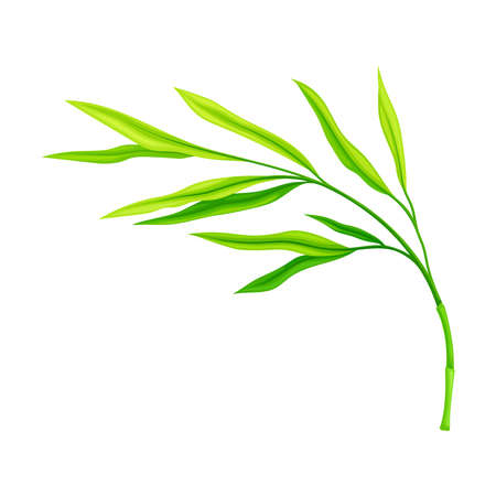 Green Bamboo Leaf Isolated on White Background Vector Illustration