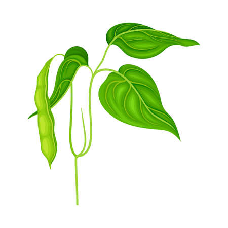 Green Stalk of Flowering Bean Plant with Hanging Pod as Vegetable Crop Vector Illustration