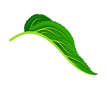 Green Petiolate Heart-shaped Sunflower Leaf with Fibers Vector Illustration  イラスト・ベクター素材