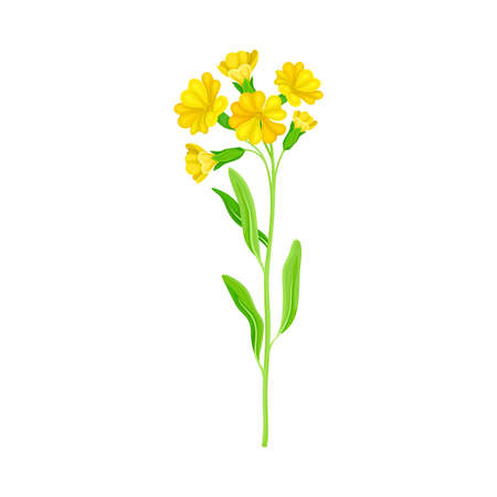 Wildflower Specie or Herbaceous Flowering Plant with Yellow Florets Vector Illustration