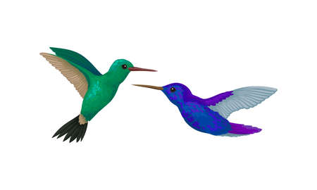Colibri or Hummingbird with Beating Wings and Bright Plumage Vector Set