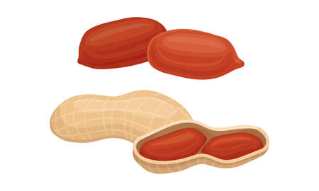 Raw Peanut Hulled and in Shell as Organic Food Vector Set