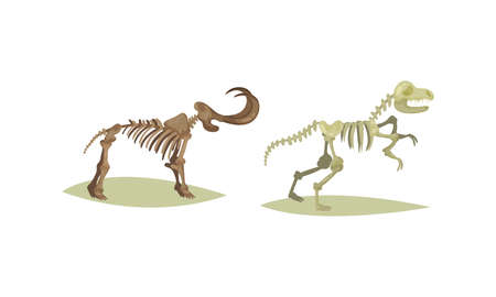 Museum Exhibit with Dinosaur and Mammoth Fossil and Skeleton Vector Set