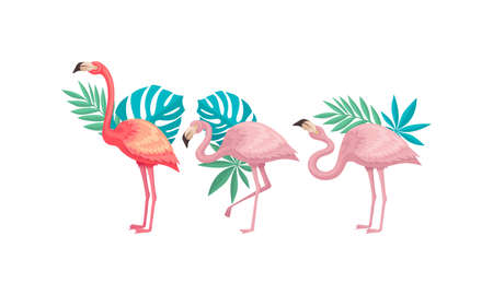 Flamingo in Different Poses with Tropical Leaves Behind Vector Set 일러스트