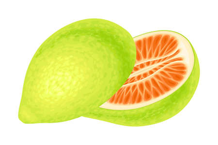 Pomelo or Pummelo as Largest Citrus Fruit with Thick Rind Vector Illustration