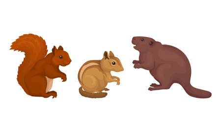 Rodents with Squirrel and Beaver Having Robust Bodies and Short Limbs Vector Set