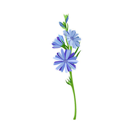 Blue Flowers on Stem or Stalk as Meadow or Field Plant Vector Illustration