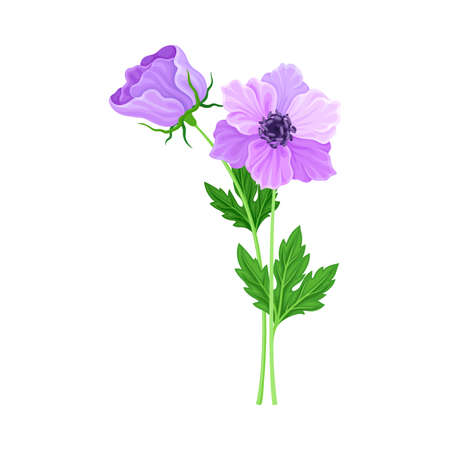 Violet Flower on Stem or Stalk as Meadow or Field Plant Vector Illustration