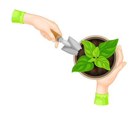 Hands with Spade Cultivating Plant and Soil in Flower Pot Vector Illustration