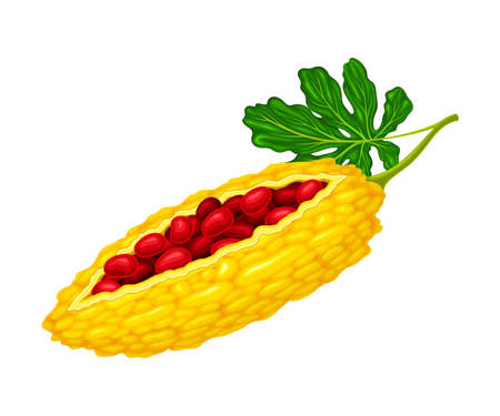 Momordica Charantia or Bitter Melon with Exposed Seeds Covered with Red Pulp as Tropical Edible Fruit Vector Illustration