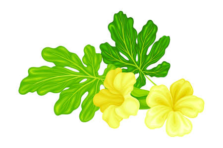 Green Leaf and Yellow Flowers of Momordica or Bitter Melon Tropical Plant Vector Illustration
