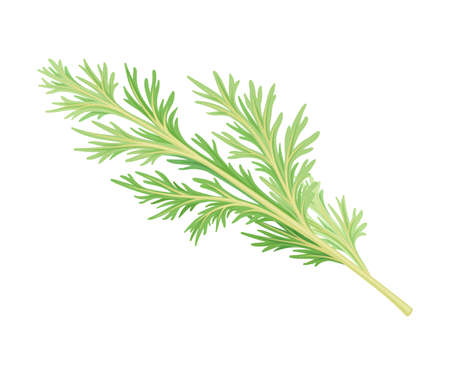 Wormwood or Southernwood Plant with Feathery Leaves Vector Illustration Illusztráció