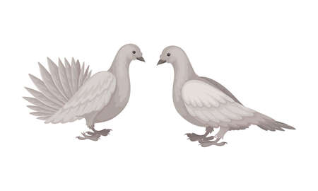 White Domestic Pigeon or Dove as Feathered Bird Vector Set